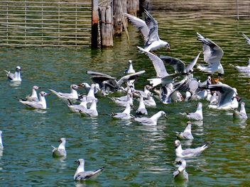 group of seagulls - image #297569 gratis
