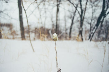 Winter is Gone - Free image #298559