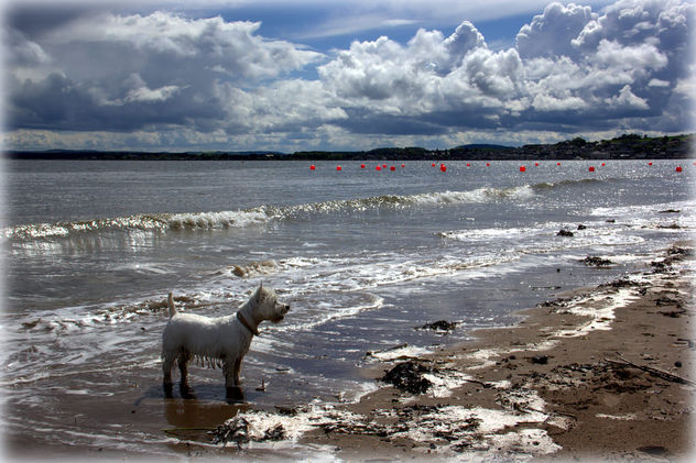 Broughty Beach, Dundee - Free image #298889