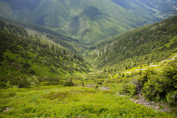 Green valley in Krkonose - image gratuit #299539