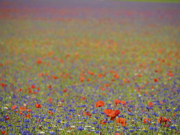 Endless flowers - Free image #299699
