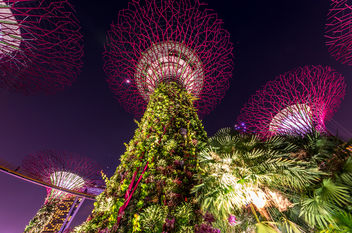 the trees IV (Singapore) - image gratuit #299709