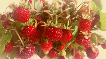 Wild strawberries - Free image #299789