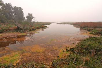 Misty Assateague Island Marsh - HDR - Free image #300059