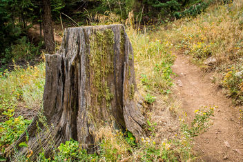 Tree Stump, Eldorado Canyon State Park - image #300439 gratis