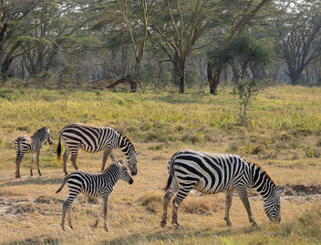 Kenya (Nakuru National Park) Mums and their kids - Free image #300539