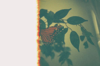 Burning Butterfly - image #300709 gratis