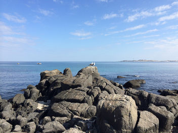A couple of seagulls on the rocks - image #301159 gratis