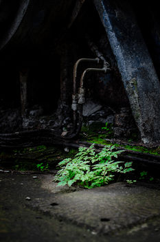 Nature finds a way. - Kostenloses image #301259