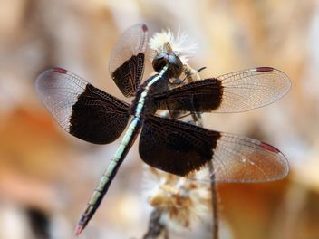 Dragonfly in public area - image #301409 gratis