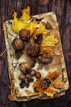 Walnuts, leaves and hazelnuts on old book - бесплатный image #302009