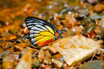 Close-up of butterfly on stones - Free image #303779