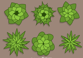 Plant Top View Vectors - vector gratuit #303909