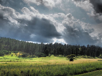 Forest with dark clouds - image gratuit #303929