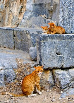 Three red cats on stones - image gratuit #304059