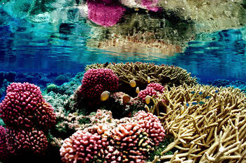 Coral Reef at Palmyra Atoll National Wildlife Refuge - image #306549 gratis