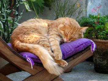 Chiquito loves his purple cushion - image #308929 gratis