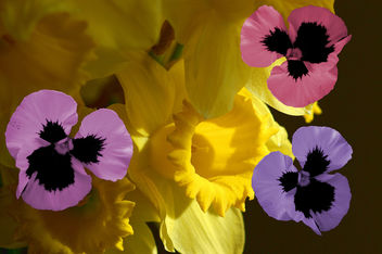 Pansy Butterflies - Kostenloses image #309919