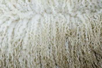 Sheep's Wool 354 (Free Texture) - Free image #311489