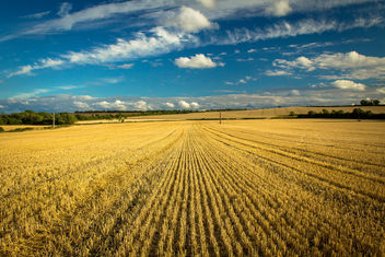 After the Harvest - image gratuit #321559