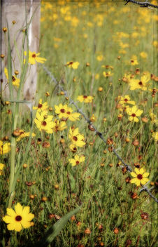 Fence and wildflowers - image #323759 gratis