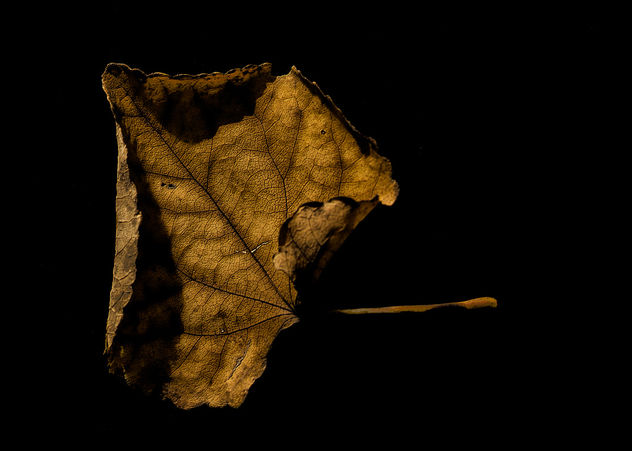 Curly Brown Leaf on Black - image gratuit #324409