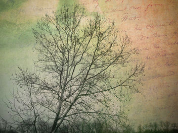 Winter Sycamore - Free image #324429