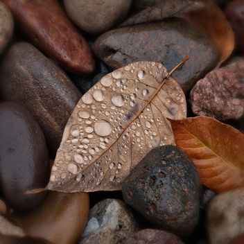 Leaves and Rocks and Raindrops - Free image #324499