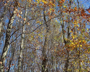 Turkey (Istanbul-Polonezkoy) Autumn leaves - Kostenloses image #327209