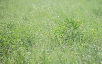 dew on grass - image gratuit #328159