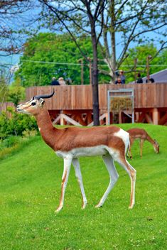 antelope in the park - image #328639 gratis