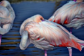 pink flamingo in park - бесплатный image #329889