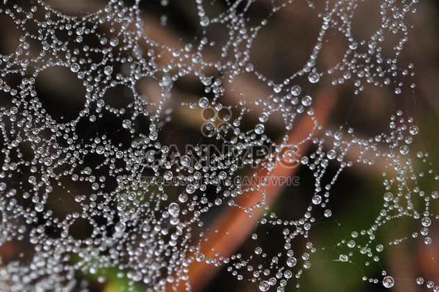 Cobweb in the forest after the rain - бесплатный image #330019