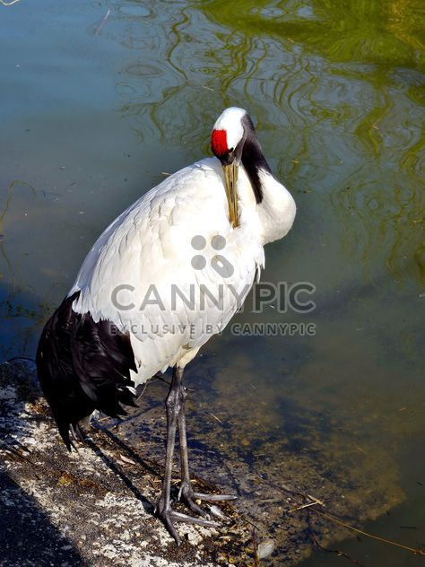 Crane in pond in a park - Free image #330299