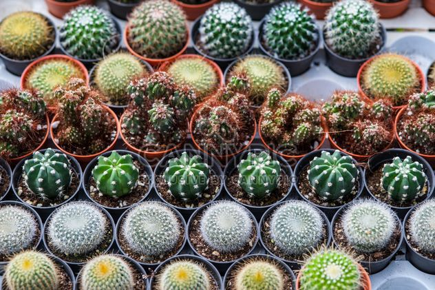 Potted cactuses - image #330879 gratis