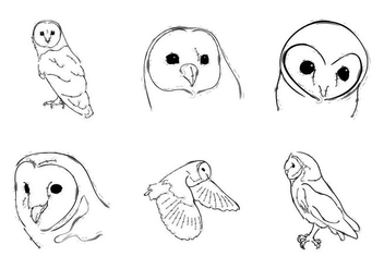 Free Barn Owl Vector Illustration - Kostenloses vector #332699