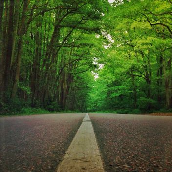 The road in the national park Curonian Spit,Russia - бесплатный image #332839