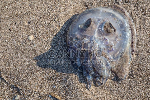 jellyfish on sand - Free image #332859