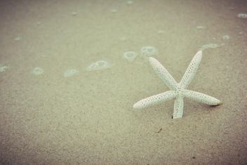 Star fish in a sand - image gratuit #332929