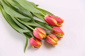 Beautiful Red and Yellow Tulips - image #333249 gratis