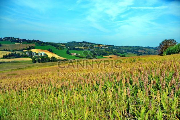 Agriculture campagne - image gratuit #333749