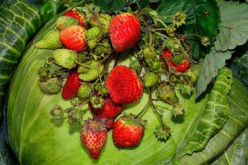 Autumn strawberry on gabbige - image #334269 gratis