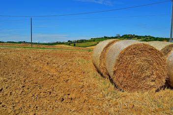 Haystacks, rolled into a cylinders - бесплатный image #334739