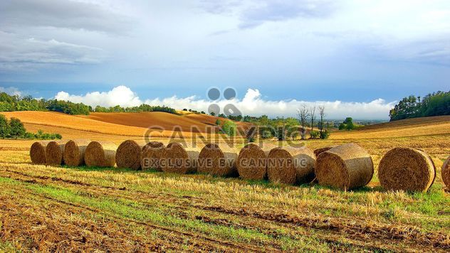 Haystacks, rolled into a cylinders - Free image #334749