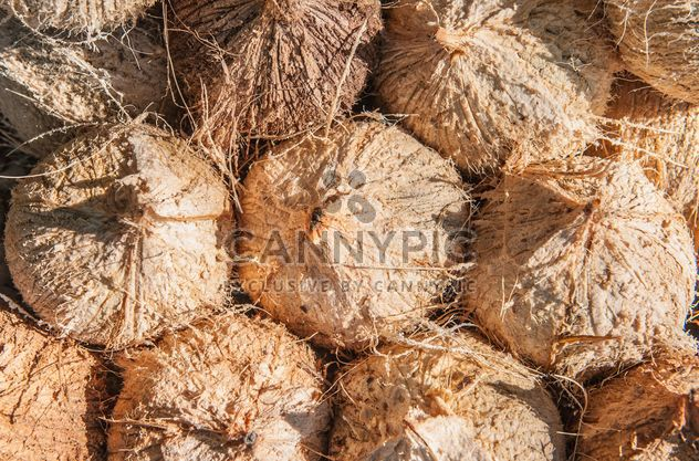 Coconut texture - Free image #335199