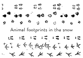 Free Animal Footprints Vector Background - Free vector #337309