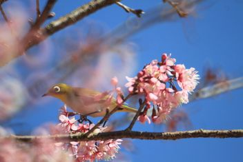 Bird on blooming tree - image #337439 gratis