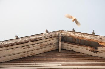 Pigeons on wooden roof - Free image #337459