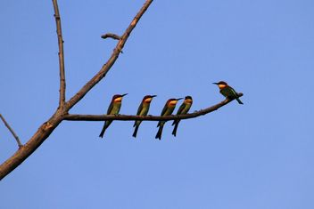 Kingfisher birds on tree branch - бесплатный image #337469