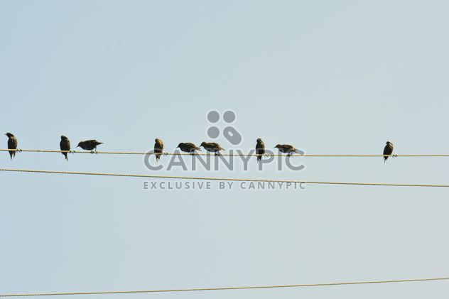 Starlings on electric wires - Free image #337489